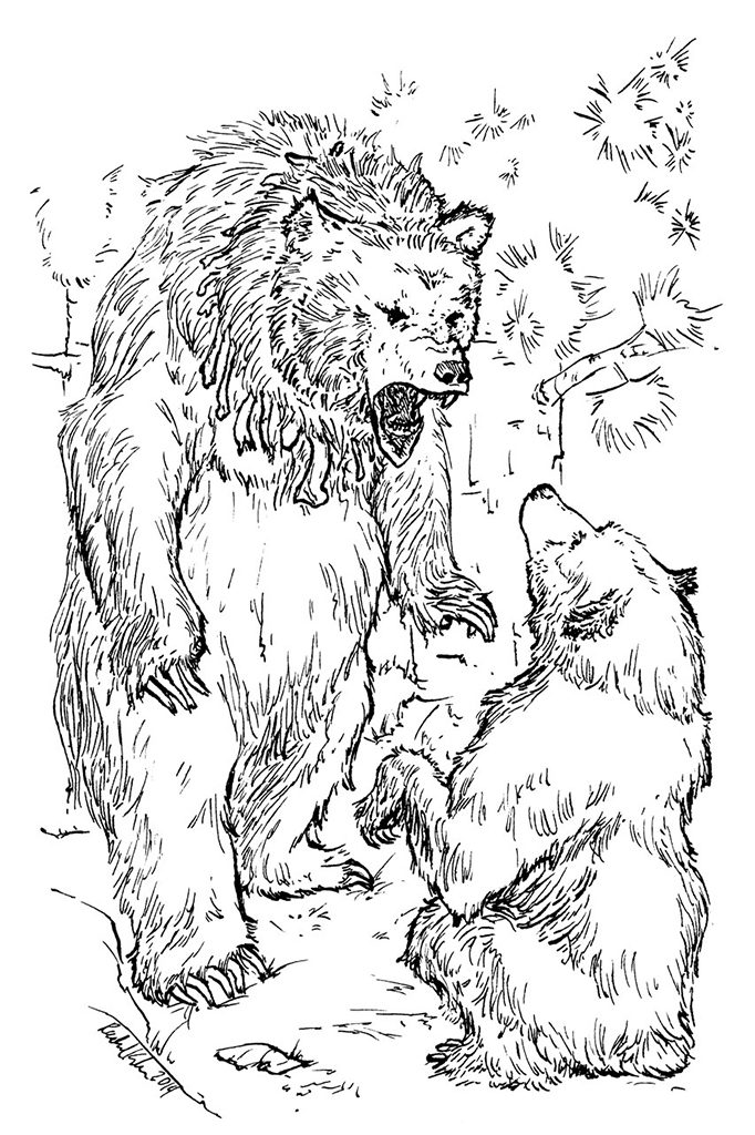 Grizzly Bear Illustration for a Private Client