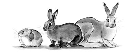 Pica, Rabbit, Hare Illustration for The Warren