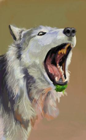 Wolf Ref Study Jan 8b