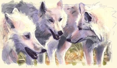 Wolf Ref Study Jan 2